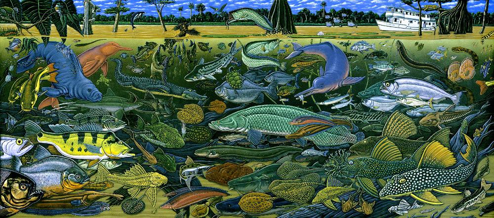 neotropical fish diversity