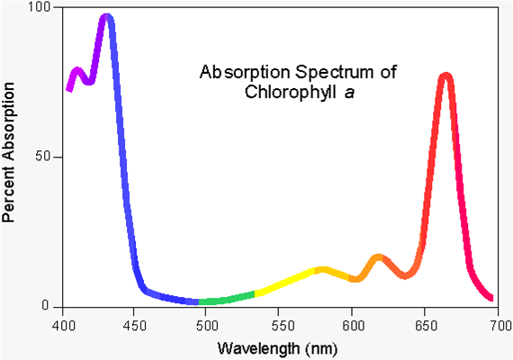 Chem 125 Experiment Ii
