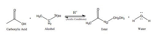 alcohol reaction paper Dehydration of alcohols reaction type: 1,2- or ß  alcohol relative reactivity  reaction usually proceeds via an e1 mechanism which proceeds via a.